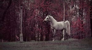 White horse by RayScream