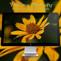 Yellow Beauty V by webcruiser
