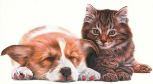 Cats + Dogs by caldwellart