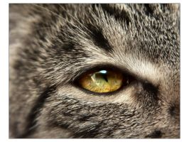 259 by cat-lovers