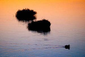 Swim at dawn by isotophoto