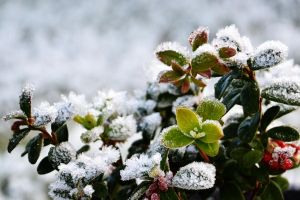 frosen life by Blue-Norway