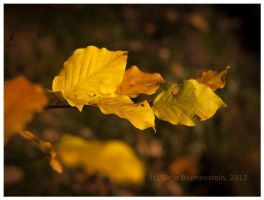 Golden October 3 by Vampirbiene