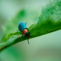 Insecto Bicolor by tithta