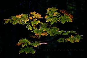 Canopy by andras120
