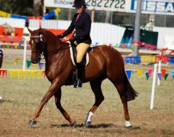 Show big chestnut ridden by Chunga-Stock