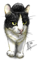 Cat drawing3 by Irkis