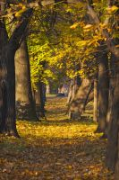 Autumn walking 1 by fishcrosser-pl