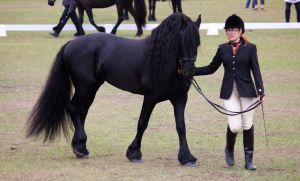 STOCK - Friesian Show 2012-41 by fillyrox