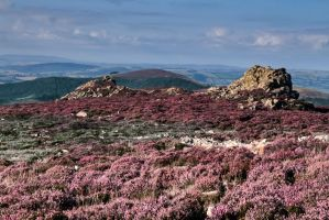 Stiperstones 2 by CharmingPhotography