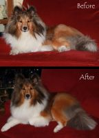 Gus's Before and After by Treekami