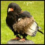 Such A Poser by In-the-picture