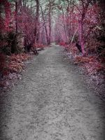 Cherry Lane by hollyelizabethjane