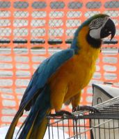 Macaw Parrot from Pow Wow by MarinaMoon