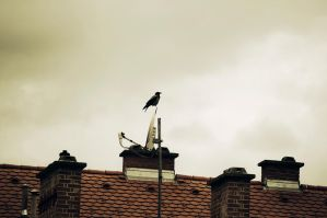 A crow by cosboom