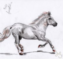 Horse by Akei-Tyrian
