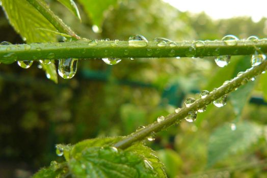 Raindrops Line by green-yellow