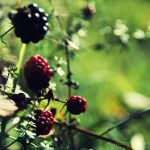 Sweet Blackberries by AljoschaThielen