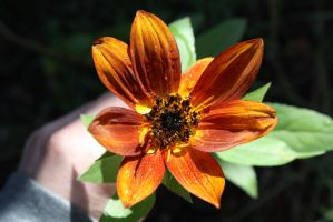 Sunflower in Autumn by KarmicCircle