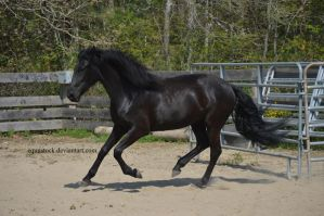 Warlander counter cantering by equustock