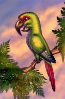 Choroy Chilean Parrot by Osmont2