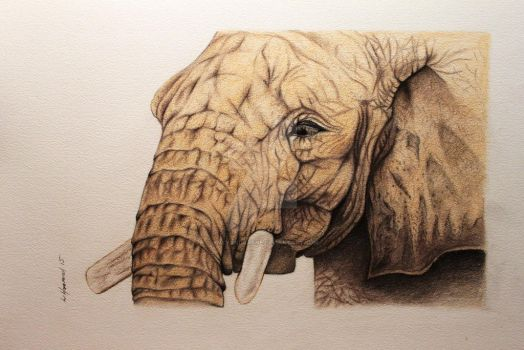 WIP Elephant first time using pastels by jintyandrayne