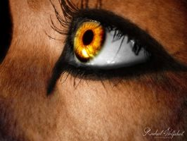 Lioness Eye by Pinkfirefly135