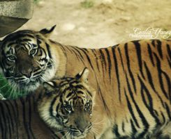 Mother and Cub by ceciliay
