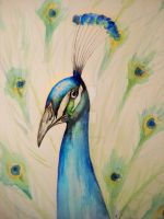 Colourful Peacock by bleistiftkind