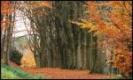 A November beech-tree line by jchanders