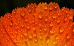 101 Droplets Wallpaper by CarlesReig