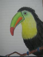 Toucan by Larry-the-cucumber