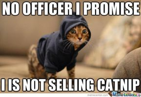 Drug Dealer Kitteh by Candyboy123