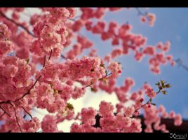Spring III by FrionR