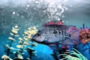 Fish by daily-telegraph