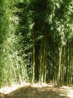 bamboo background stock 2 by Billy-jean-stock