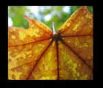 portrait of a leaf by heatherspettals