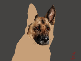 Realistic German Shepherd portrait WIP by RvS-RiverineStables