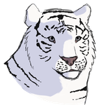 White Tiger Markings and Shading Practice by Artist-Who-Draws