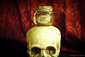 Lycanthrope Specimen Jar atop Skull by StormbloodCurio