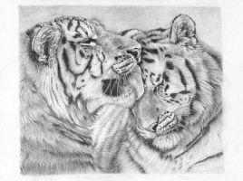 Tiger's love by Azany