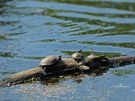 Mommy and me turtles by Mogrianne
