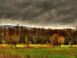 In The Fields...IV by cavinton