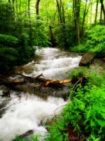 Smoky Mountain Stream by AndrewCarrell1969