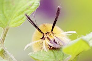 Tiger Moth Caterpillar by Cute-And-Bright