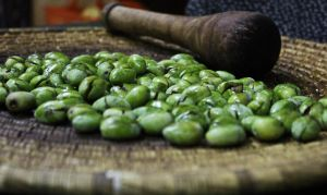 Palestinian Olives by Shatha92