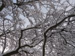 Snow tree by troika1138