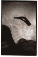 Untitled - Whale silhouette by holdens-shadow