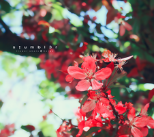 Color Everywhere by Stumbl3r