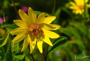 Can You See the Yellow Spider? by calciumblue